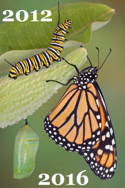 EY_Butterfly